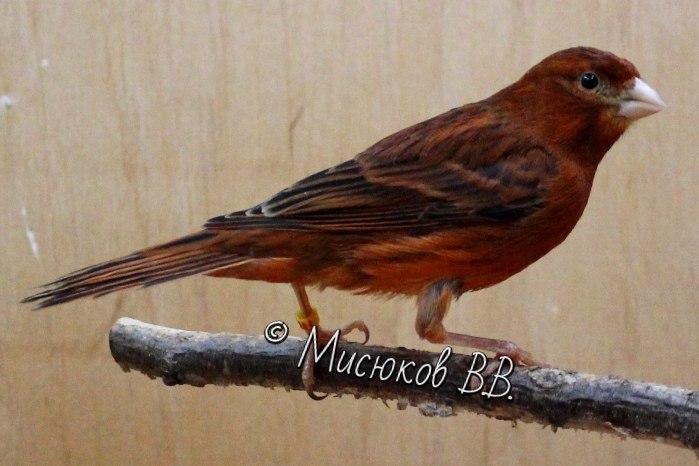 Фотографии моих птиц  - Страница 3 TKhV9BEXiUI