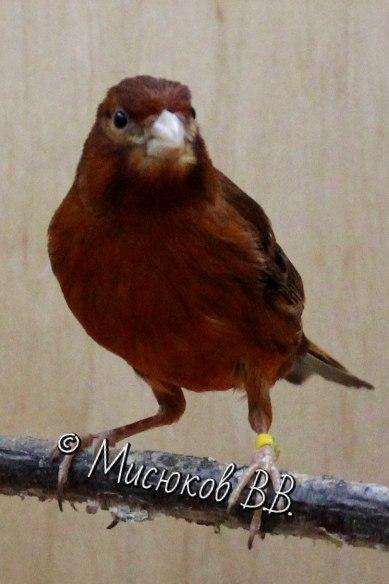 Фотографии моих птиц  - Страница 3 HLobwGTZT-E