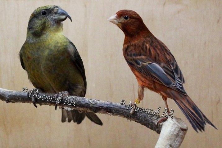 Фотографии моих птиц  - Страница 3 Rj0snuIoXFE