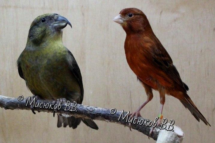 Фотографии моих птиц  - Страница 3 MgoMpOuh2ro