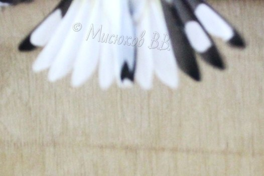 Фотографии моих птиц  - Страница 3 PGl_Yrn4xdo