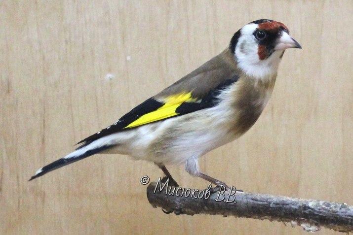 Фотографии моих птиц  - Страница 3 P70DmScAOFc