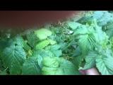 Нападение дикой малины на людей в Солотче😱