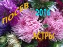 ПОСЕВ Астры на рассаду 11 апреля 2016 год