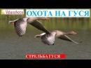 Охота на гуся! Как ПРАВИЛЬНО стрелять гуся - Videoohota