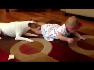Приколы с животными. Забавные кошки, собаки, гуси и медведь