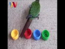 Clever Parrot