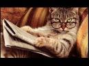 У кошек как у людей! Прикольное видео про кошек Funny cats compilation