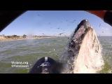 Whale Bumps Paddle Boarder Viviana