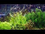 Запуск аквариума -  просто и доступно - Часть 1