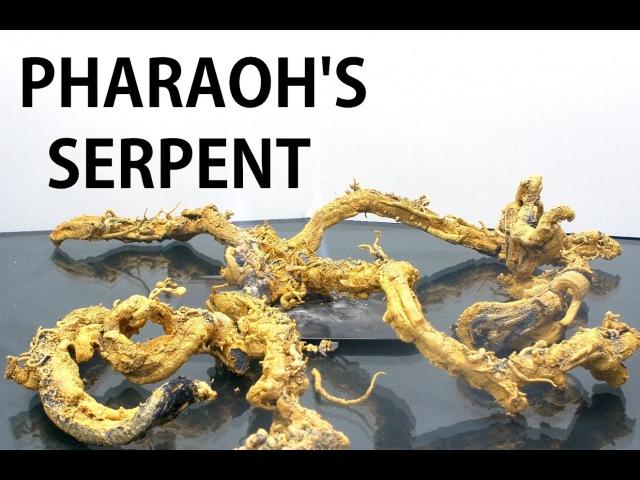 The Pharaoh's Serpent in 4K