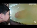 Ребёнок орёт на рыбу и корчит лицо, а рыба отвечает тем же / A fish in an aquarium mimics a child who is making faces