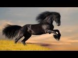 Послушайте и посмотрите!!!! Вороные кони ~ Евгений Дятлов