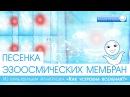 Песенка Эзоосмических мембран из мультфильма Аллатрушка Как устроена Вселенная