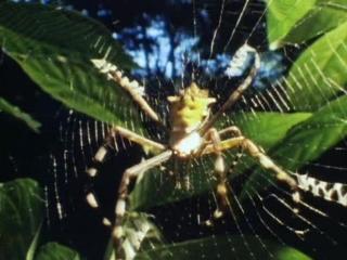 BBC. Империя чужих: насекомые. 03. Фронтовая зона