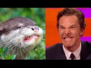 Benedict Cumberbatch's resemblance to an otter The Graham Norton Show Series 18 Episode 9 BBC