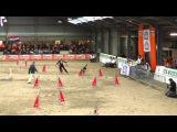 IFCS 2016 Janita and Fu, individual jumping