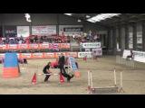 IFCS 2016 Janita and Fu, biathlon agility large