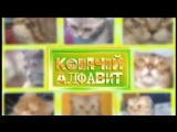 Русская голубая кошка и кошка породы нибелунг