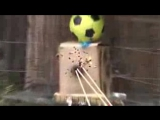 Shooting a Centershot Double PVC Bow With Built In Quiver_low