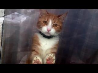 Не уходи от меня! | Самое печальное видео, которое вы только могли увидеть