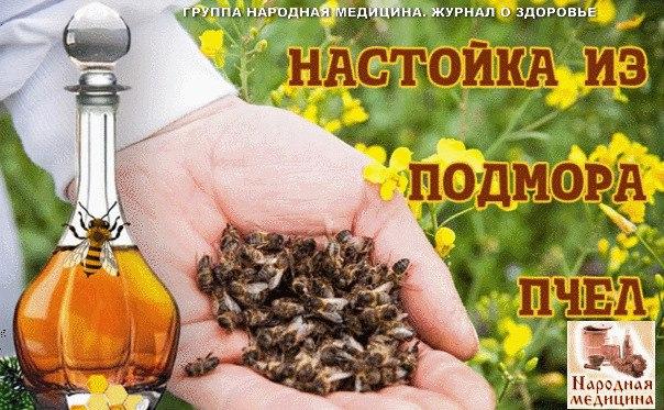 Как сделать настойку из пчелиного