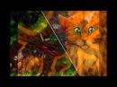 Смерть кота воителя Звездоцапа