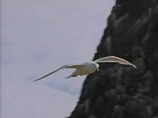 Повторное открытие мира - #13 Берингово море - Сумерки над Аляской
