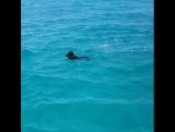Dolphin shows a dog how to swim.