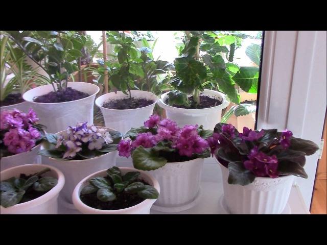 Комнатные растения моей подруги Комнатные цветы Домашние растения