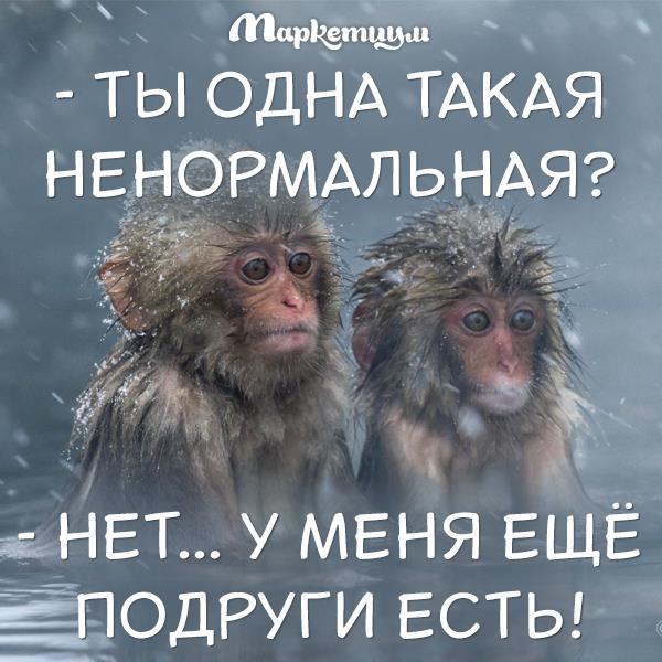 Разоблачена мощная бот-сеть Mumblehard, администрируемая российскими спамерами, - киберполиция - Цензор.НЕТ 2415