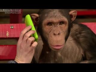 Фокусник показывает фокус обезьянам шимпанзе с помощью айпада / Monkeys React To iPad Magic