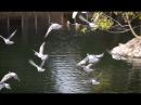 Голуби | Джуманджи. Животные в мегаполисе