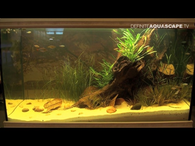 Биотопный аквариум Каменистый приток реки Тарику Новая Гвинея