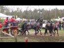 HARM Mareike GER CAI3 Horst 17 04 16 H4 Marathon Ob5