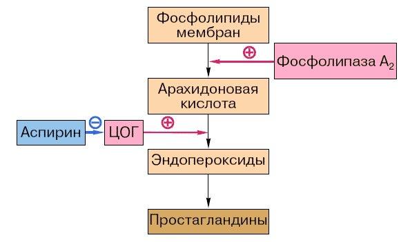 Как работают клетки нашего организма - 19b0c