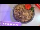 Полба - прародительница русских каш Eco-Store
