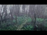 Лес Леди Геи | Альвы