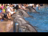 Dolphin Days (Full Show) at SeaWorld San Diego on 83015