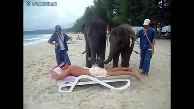 Слоновий массаж на Шри-Ланке