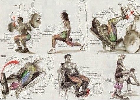 тренировка на все группы мышц