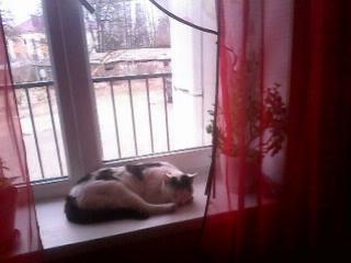как ещё можно звать кота кроме кот ,кошка(смешной прикол)