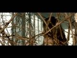 ANTONIA feat. Jay Sean - Wild Horses Official Video