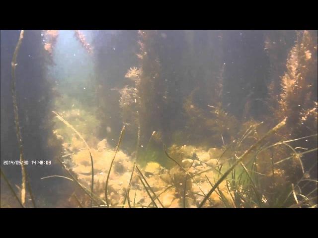подводная охота на пеленгаса владивосток 2014