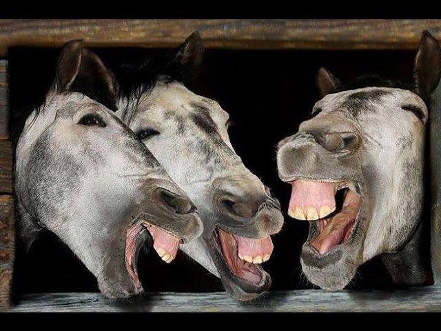 Horsemen | Horseblog 1 | Cilvēki un Komentāri