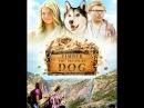 Тимбер говорящая собака Семейное кино 2016