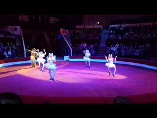 Манки в Пермском цирке в клетке тигров