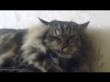 FUNNY NEW VIDEOS Funny Cats Funny Cat Videos - Kitten Fails 2014 HD