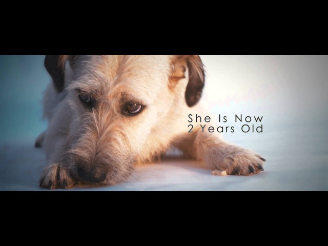 PLAYMEN ft. Christos Mastoras - Stand By Me Now (Official Video)