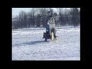 Играй гармонь . Вологодские казаки на празднике коня.
